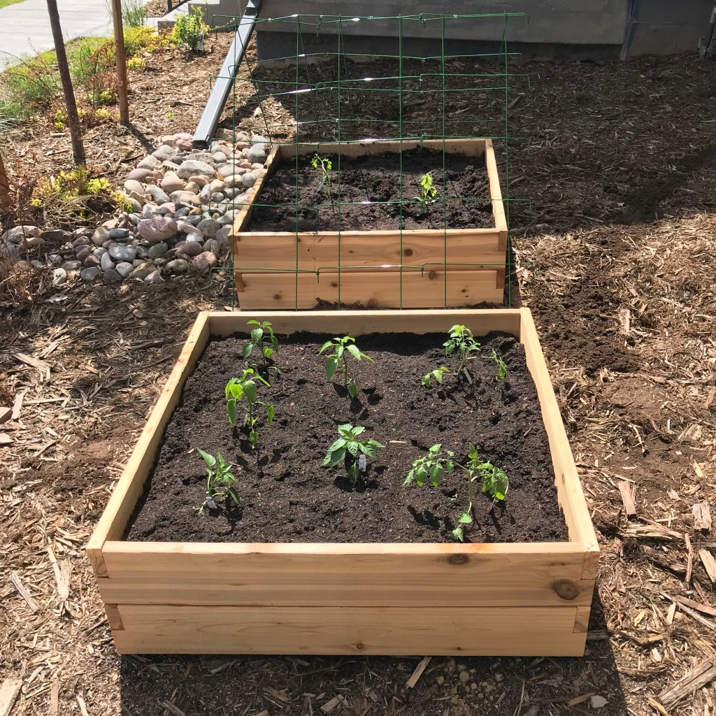 two raised garden beds with plants